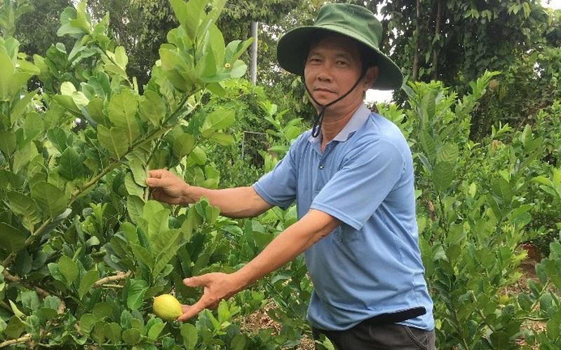 """""""Liều"""" trồng những loài cây lạ, một nông dân tỉnh Bà Rịa-Vũng Tàu bán trái cũng đắt mà bán giống nhiều người mua"""