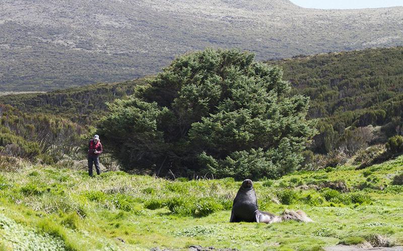 """Cây thông được Guinness công nhận là """"cây cô đơn nhất thế giới"""""""