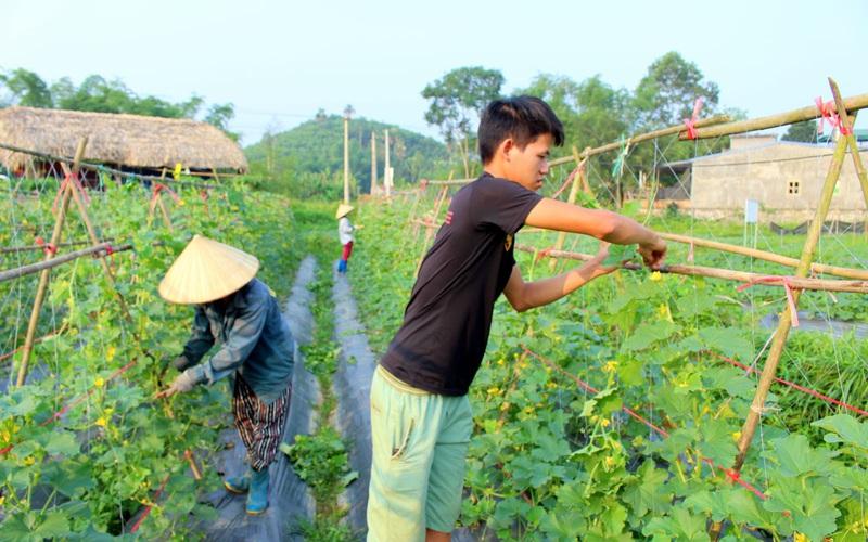 """Thái Nguyên: Chàng """"hot boy"""" kỹ sư 9x và niềm say mê với nông sản sạch"""