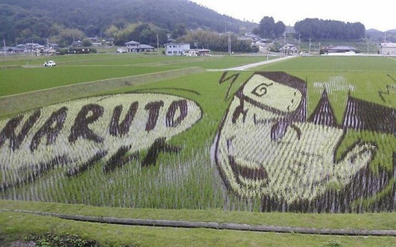 """Chuyến hành trình tham quan những cánh đồng lúa """"đẹp như tranh vẽ"""" tại Nhật Bản"""