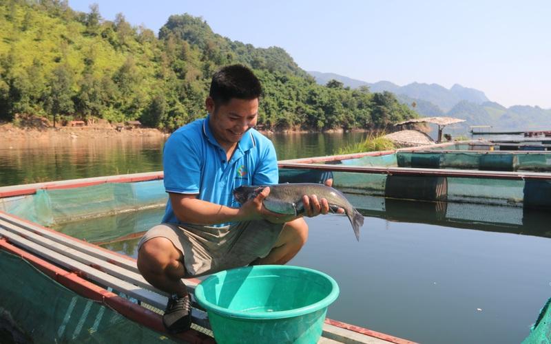 Trai Thái nuôi cá lăng trên lòng hồ sông Đà, lãi gần 350 triệu/năm