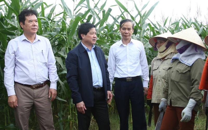 Video: Thứ trưởng Bộ NN&PTNT Lê Quốc Doanh thăm mô hình sản xuất ngô sinh khối tại Vĩnh Phúc