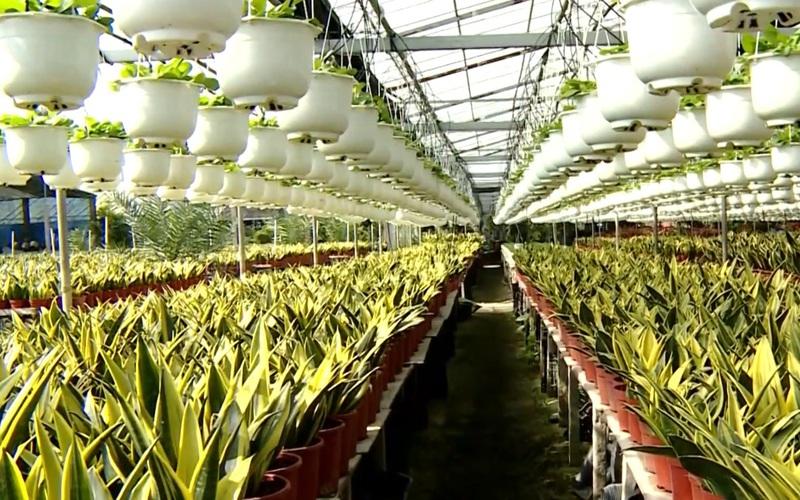 Chuẩn bị Tết Tân Sửu: Làng hoa Sa Đéc rực rỡ những sắc màu