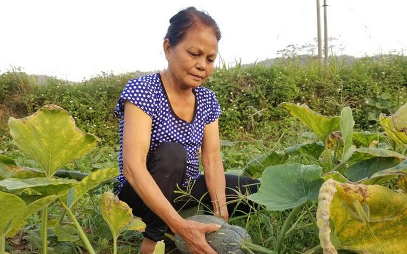 10 năm thực hiện Kết luận số 61 tại tỉnh Lạng Sơn: Hội viên nông dân tăng, thu nhập cũng tăng