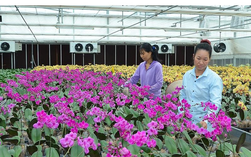 Liên kết sản xuất hiệu quả, giúp nông dân tăng thu nhập