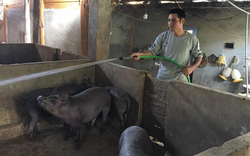 """Video: Từ hộ nghèo, anh nông dân thu trên 200 triệu đồng/năm nhờ mô hình khép kín """"nấu rượu - nuôi lợn"""""""