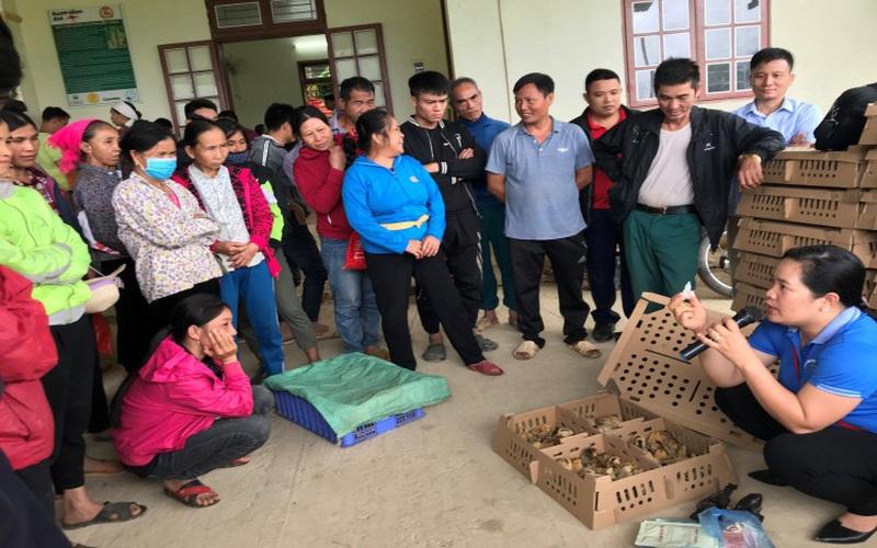 Sơn La: Hộ nghèo bản Tưn nuôi gà an toàn sinh học, bớt lo cảnh thiếu đói mùa giáp hạt