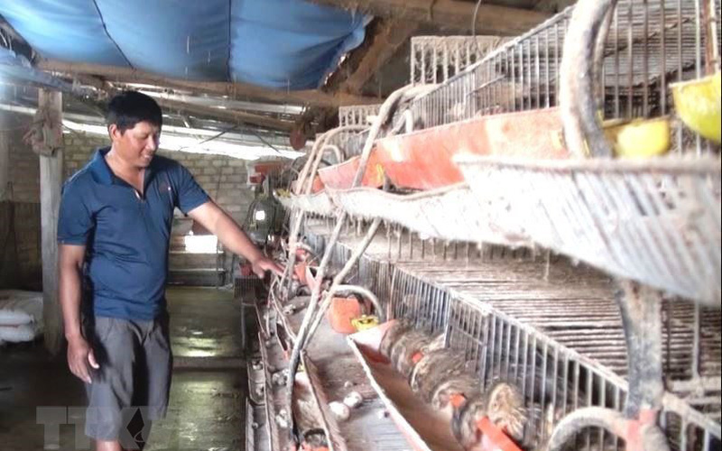 Nông dân Quảng Bình tích cực sản xuất nông nghiệp sau bão lũ