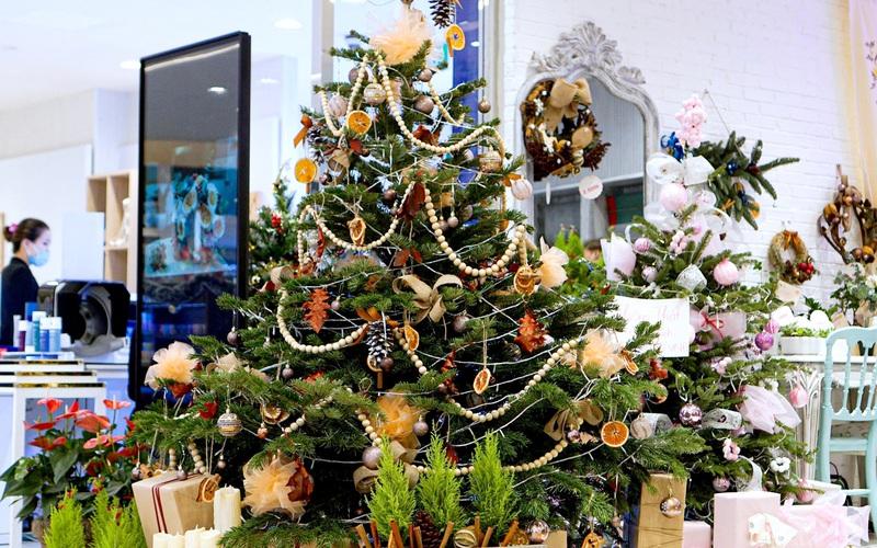 Nhà giàu Sài Gòn chi cả trăm triệu mua cây thông thật trang trí Giáng sinh