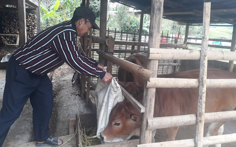 Gương điển hình về giảm nghèo trong cộng đồng (bài 3): Hỗ trợ bò giống có đối ứng ở Mường La