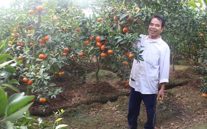 Những vườn cây ăn quả sai lúc lỉu ở một huyện ngoại thành Hà Nội