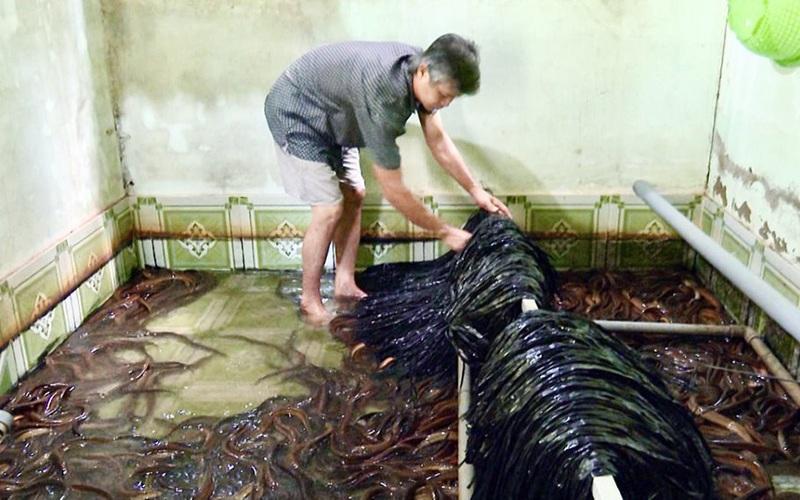 Hậu Giang: 1 huyện có tới 320 nông dân nuôi lươn không bùn, lươn thịt bán giá 200-250.000 đồng/ký, cứ 1 bể lời 20 triệu
