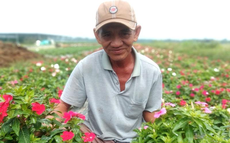 Từ chậu hoa dừa cạn mua chơi, ông nông dân tỉnh Long An giờ thành tỷ phú nhờ trồng loài hoa đồng quê này