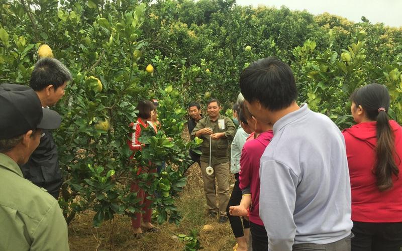 Bắc Giang: Vì sao nông dân ở đây thích học trồng cây ăn quả, thích làm ăn lớn?