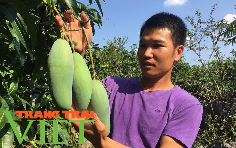 Mai Sơn đẩy mạnh sản xuất nông nghiệp theo hướng hàng hoá