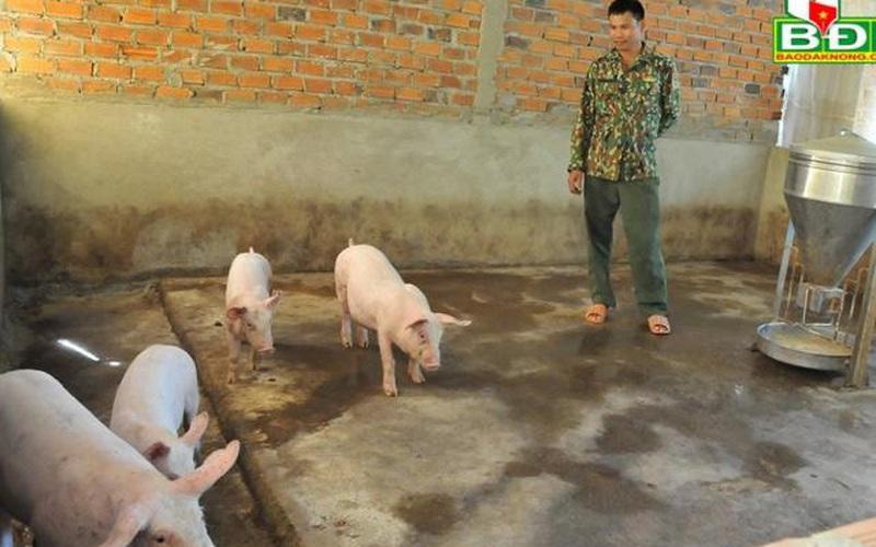 """Đắk Nông: Giá lợn giống """"khét lẹt"""", """"lùng"""" cả tháng mua được 4 con"""