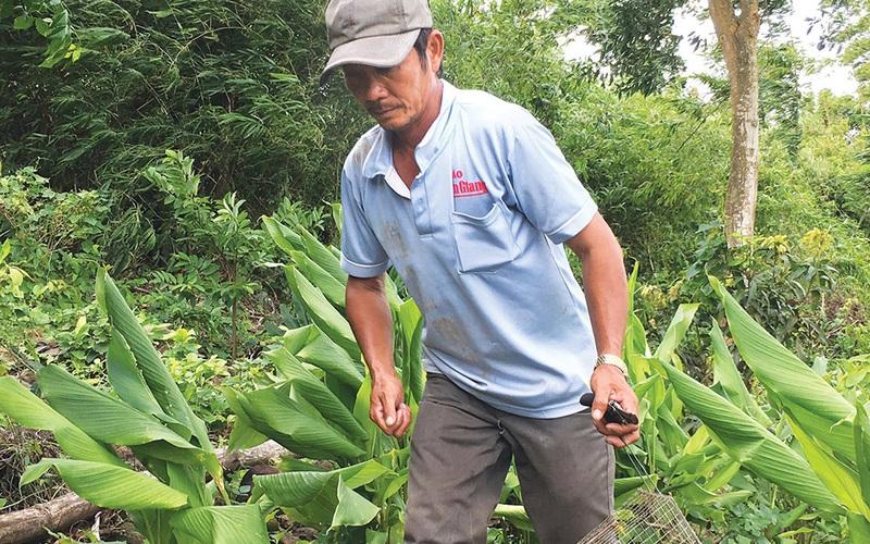 An Giang: Chuột đồng xưa rồi, bẫy bắt chuột núi mới gọi là thơm ngon