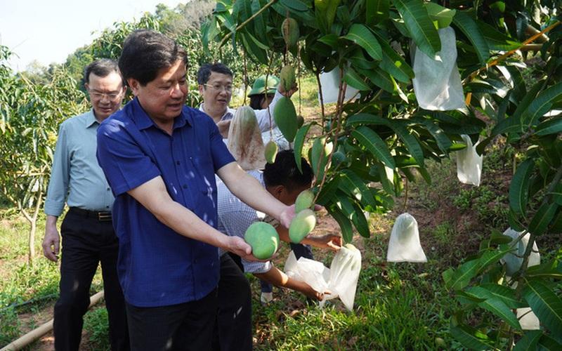 Sơn La: Huyện Yên Châu phát triển cây ăn quả theo hướng hữu cơ