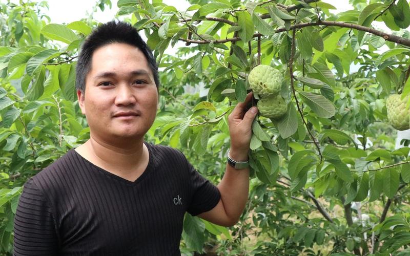 Lâm Đồng: Trồng na Thái trên đất đá, điều lạ là không phải tưới nước, hái trái bự bán 70 ngàn/ký