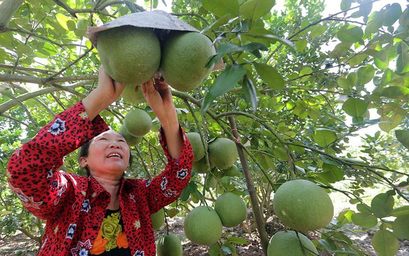 Hưng Yên: Nhiều nông dân giàu có, thành tỷ phú nhờ nuôi con đặc sản, trồng cây ăn quả đặc sản