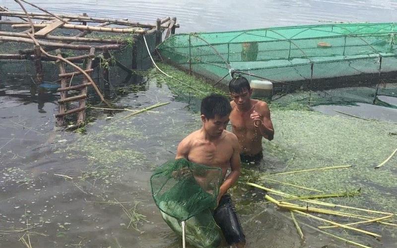 TT-Huế: Dân rớt nước mắt nhìn toàn cá đặc sản đắt tiền lăn ra chết