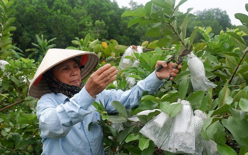 Tuyên Quang: Nông dân thoát nghèo, vươn lên khá giả nhờ được vay vốn từ ngân hàng này