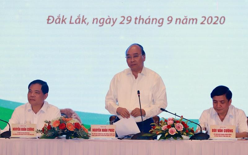 Thủ tướng đề nghị làm rõ câu hỏi của nông dân: Tại sao có những vùng trồng mắc ca không ra quả?