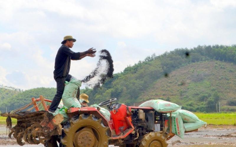 Nông dân làm giàu từ 'hạt ngọc' trên non