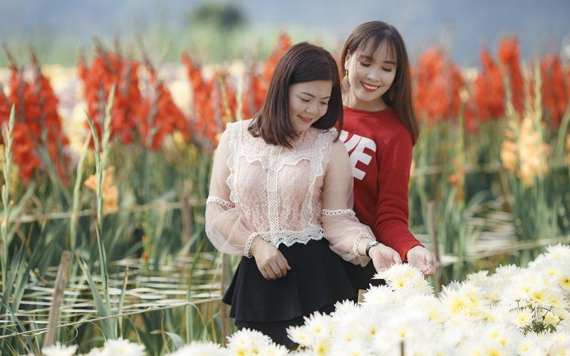Sơn La: Bỏ túi cả trăm triệu đồng nhờ trồng hoa xuân