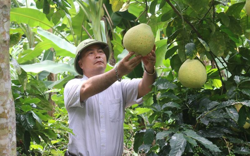 Đưa cây ăn quả lên đất dốc, nông dân Mai Sơn thu nhập khá