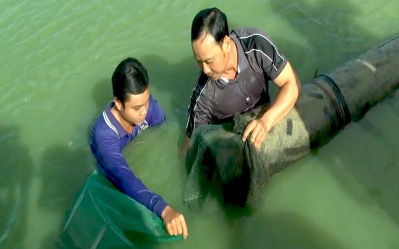 Đào ao đất nuôi kết hợp cá heo và chạch lấu, một kỹ thuật đơn giản mà hiệu quả không ngờ