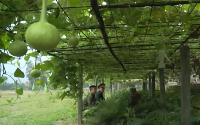 Thừa Thiên - Huế: Khôi phục sản xuất tại các doanh trại quân đội sau thiên tai