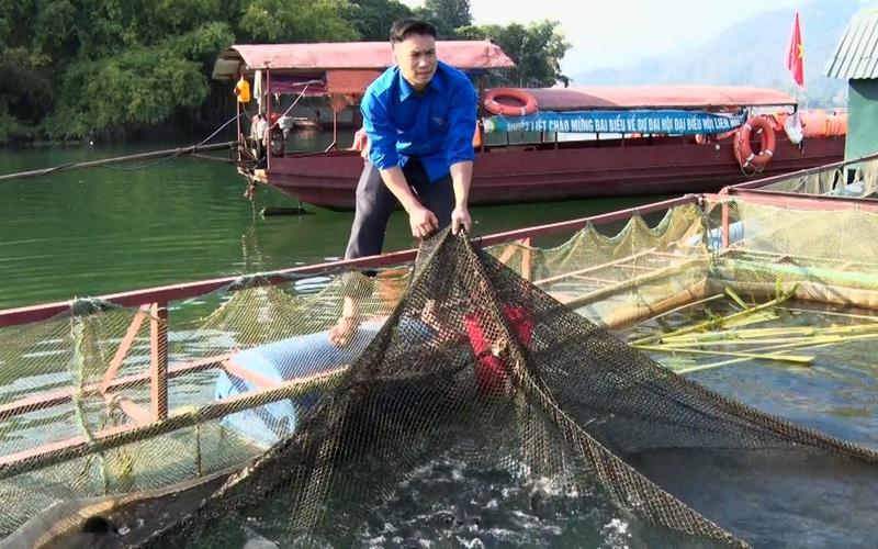 Đưa cá ra sông Đà nuôi, ung dung thu lãi 160 triệu đồng