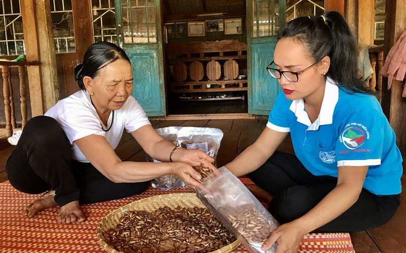 Gia Lai: Thứ hạt rụng đầy trong rừng, trước dân nhặt ăn chống đói, nay biết là quý hiếm mang đi bán đắt tiền