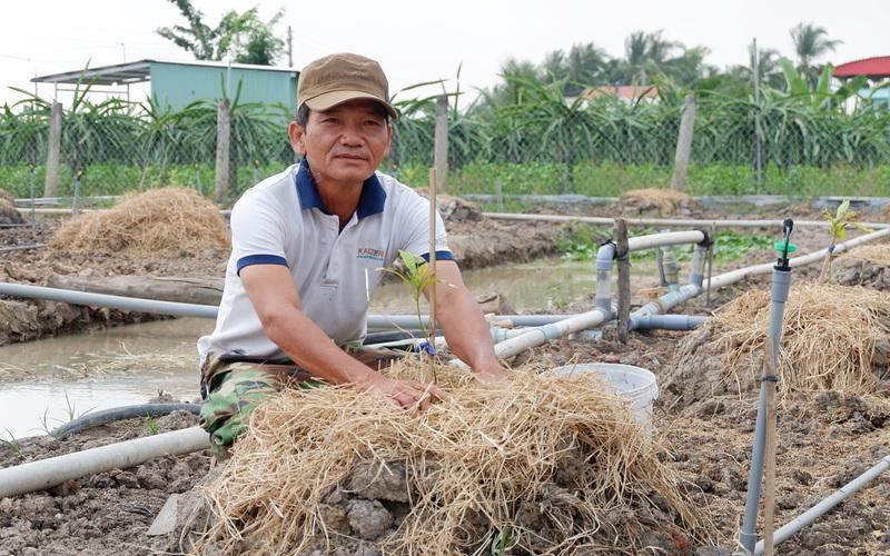 """Long An: Đáng buồn, vì sao miệng nói không dám nhưng nông dân vẫn """"xuống tay"""" phá bỏ thanh long?"""