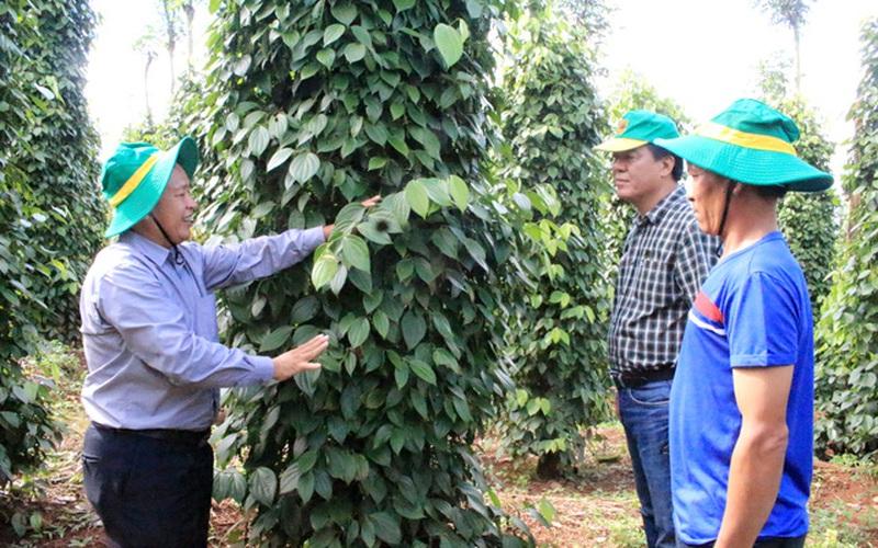 Phát huy sức mạnh khuyến nông từ kết nối công - tư, hàng nghìn nông dân được hưởng lợi