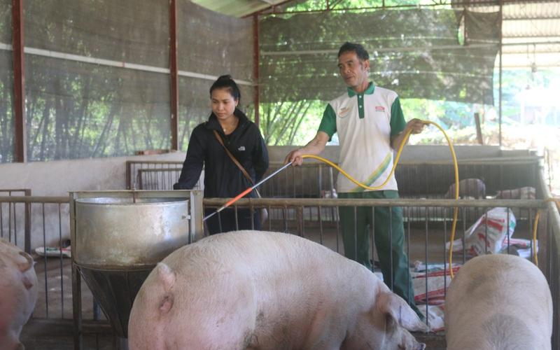 Hội nông dân Mai Sơn: Cầm tay chỉ việc, giúp nông dân làm giàu