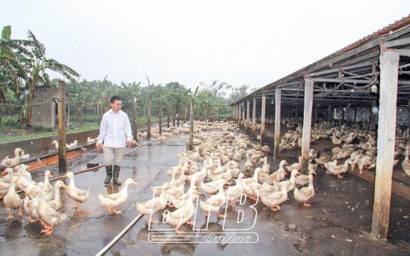 Thái Bình: Một nông dân thu 10 tỷ/năm nhờ nuôi con chạy lạch bạch mà người xưa can ngăn đừng có ham