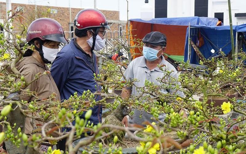 """Bình Định: Trồng mai vàng, vừa rồi bán """"chạy"""" dịch Covid-19 mà nông dân ở đây vẫn thu về gần 80 tỷ đồng"""