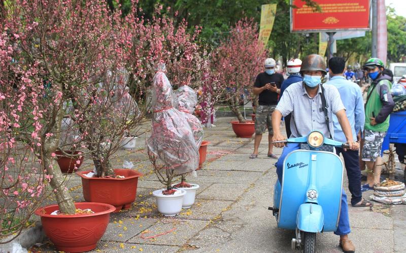 """Chợ hoa """"nhà giàu"""" ở Sài Gòn còn hơn chục cây đào, người dân bắt đầu đổ xô đi mua hoa"""