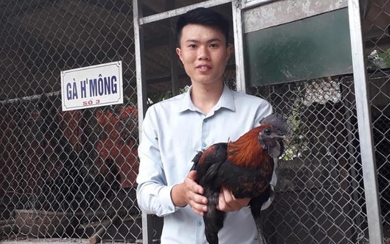 Từ giải Nhất cuộc thi khởi nghiệp nông nghiệp, trai vùng cao thành ông chủ của đàn gà Mông cả nghìn con