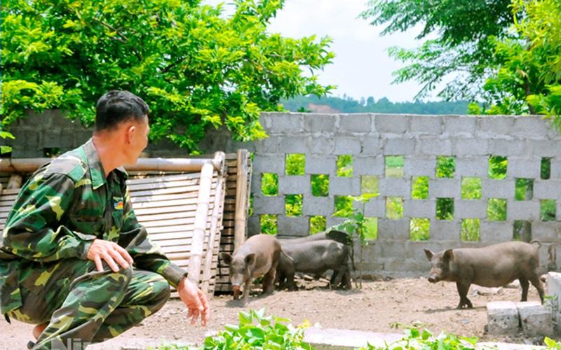 """Ninh Bình: Lợn Táp Ná là thứ lợn gì mà nuôi chưa kịp lớn đã có người """"đặt gạch"""" đòi mua?"""