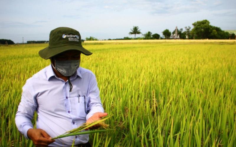 Quảng Trị tái cơ cấu nông nghiệp theo hướng công nghiệp cao, hữu cơ