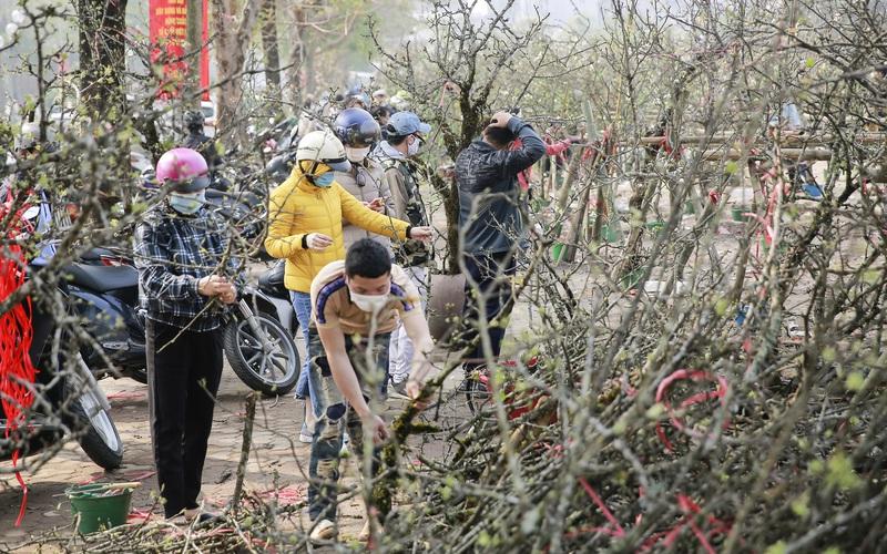 Người Hà Nội chen nhau mua hoa lê sau Tết Nguyên đán