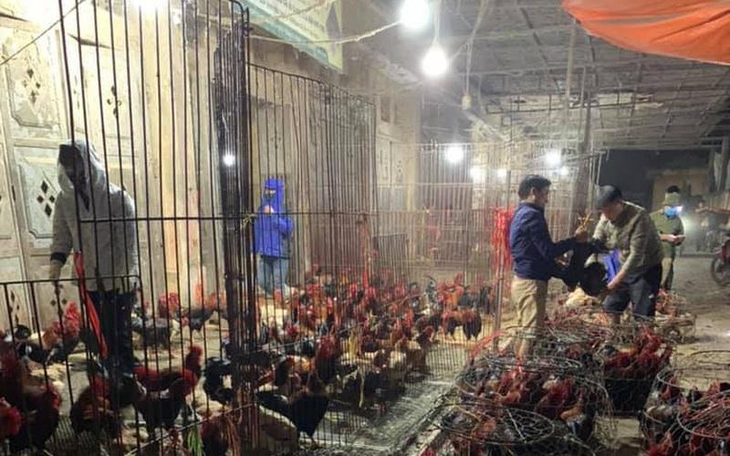Giá gia cầm hôm nay 21/2: Cập nhật giá gà, vịt mới nhất tại các vùng