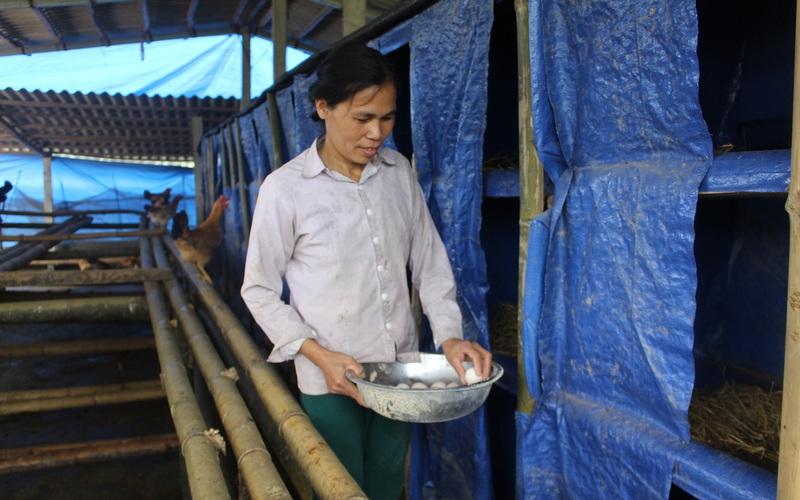Phú Thọ: Hơn 80.000 triệu phú, tỷ phú ra đời từ phong trào nông dân thi đua sản xuất, kinh doanh giỏi