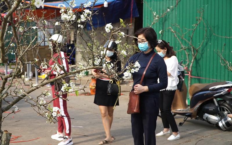 Video: Hoa lê rừng xuống phố khoe sắc trắng muốt, hàng nghìn người dân Thủ đô chen nhau mua