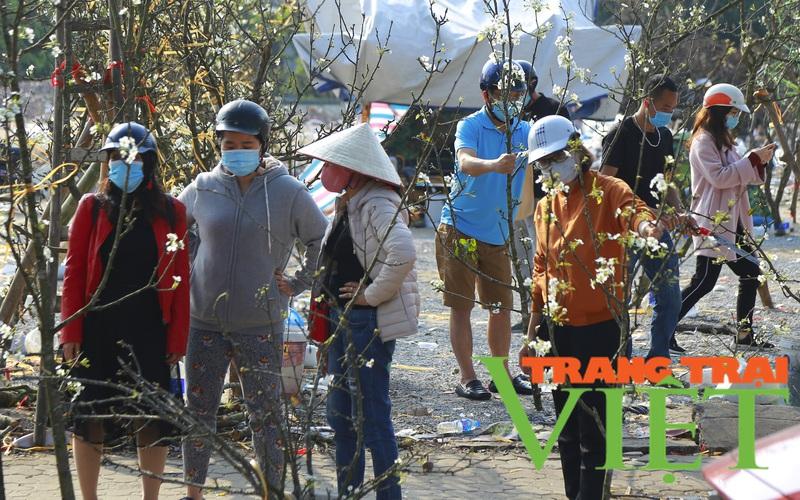 Đào phai mai tàn, người Hà Nội lại chơi thứ cây gốc rêu mốc hoa trắng muốt