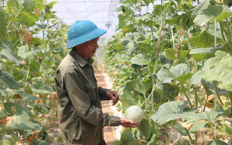 Hà Nội: Hơn 500 mô hình hay giúp nông dân tăng thu nhập