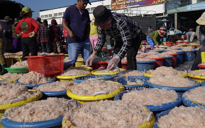 Bình Định: Bất ngờ trúng quả lớn, ngư dân đưa cả tấn ruốc vào bờ bán cho thương lái thu hàng chục triệu đồng